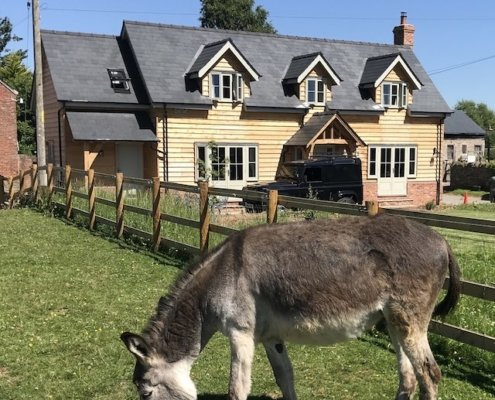 Mistletoe Cottage Donkey