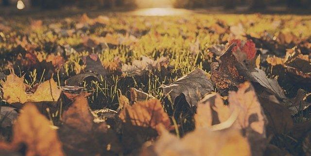 Higham Ferrers Autumn